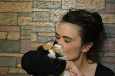 For the love of squishy-face cats:) Calico Persian