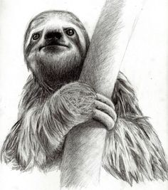 Image result for drawings of a sloth