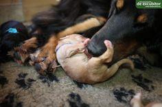 Nach der Fütterung ein bisschen den Bauch lecken, dass lässt sich jeder Welpe gern gefallen. Dogs, Animals, Puppys, Pet Dogs, Animales, Animaux, Doggies, Animal, Dog