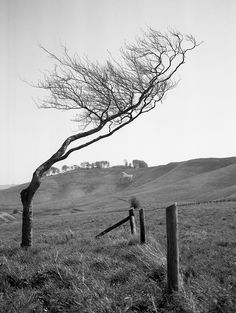 Windswept, Cherhill Down By Niall Oswald : flickr