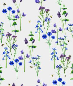 Sophie Brabbins is a freelance illustrator and surface pattern designer specialising watercolour illustrations and patterns. Botanical Illustration, Watercolor Illustration, Textile Patterns, Print Patterns, Textiles, Freelance Illustrator, Surface Pattern Design, Portfolio Design, Print Design