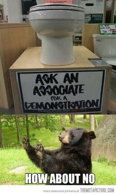 funny-toilet-store-demonstration-bear