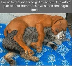 Cute Overload: Internet`s best cute dogs and cute cats are here. Aww pics and adorable animals. Animals And Pets, Baby Animals, Funny Animals, Cute Animals, Funniest Animals, Tier Fotos, Funny Animal Pictures, Pet Pictures, Animal Pics