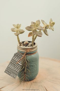 Succulent in mason jar