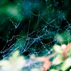 When your son points out a spider's web as something beautiful in the garden