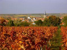 freinsheim germany   Panoramio - Photo of Freinsheim im Herbst