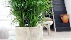 lores e jardinagem Plantas e Jardins: plantas, f