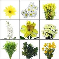 Wholesale Blooms Enchanted Meadow Wildflower Pack - Yellow & White Wildflowers - Blooms by the Box