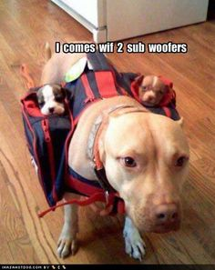 the cutest subwoofers.