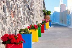 Cute flower pots in Santorini island-Greece Greek Flowers, Flora Flowers, All Flowers, Colorful Flowers, Vibrant Colors, Santorini Island, Santorini Greece, Henri Matisse, Flower Planters