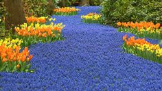 Natureza-colorida