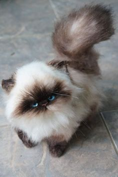 Persian kitten Color point By Tsybina Natali - Bear Pile