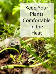 How to keep your plants comfortable in the heat