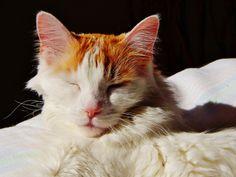 enjoying the morning sun in paradise Good Morning Sunshine, Prayers, Paradise, Cats, Animals, Gatos, Animales, Good Morning Sun, Kitty Cats