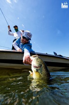 Largemouth bass on the fly. Black Bass - Spain © Stephan Dombaj www. Bass Fishing Tips, Fly Fishing, Chris Craft Boats, Largemouth Bass, Camping, Black, Fishing, Campsite, Black People