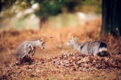 autumn fun by andrew evans., via Flickr