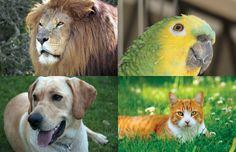 Animais - Pesquisa Google