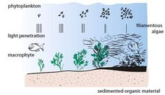Impacts of Eutrophication on Macrophyte and Fish Assemblages