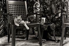 Lounging Around | Hemingway Cats | Key West, FL by HuTDoG83, via Flickr