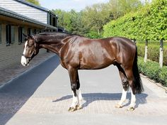 European Sport Horses for sale