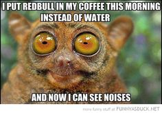 Funny Monkey Memes | Redbull In My Coffee | Funny As Duck | Funny Pictures