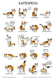 Cat body language with other cats cat ears flattened sideways,cat posture meaning how to learn cat language,what does cat behavior mean what does it mean when cats ears go back. I Love Cats, Crazy Cats, Cute Cats, Funny Cats, Cute Cat Names, Hilarious Animal Memes, Adorable Kittens, Cat Body, Cat Hacks