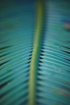 Fresh, organic hues can bring the strong ties of nature to your walls. Patterns In Nature, Textures Patterns, 2015 Color Trends, Ferns Garden, Shades Of Teal, Color Of The Year, Green And Grey, Green Colors, Aqua
