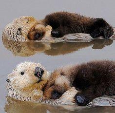 Cuddling sea otters