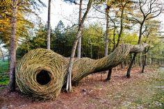 Artist weaves delightful 'bio-sculptures' & animal habitats out of wood (Video) : TreeHugger