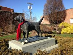 A small town garden dedicated to a psychic dog with the most soulful eyes.