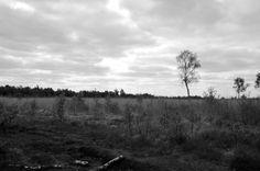 #Twente #Aamsveen #Holland #landscape
