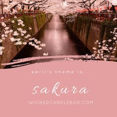 Our luxury candle + lifestyle subscription box is curing. Click over to the website (link in bio) and subscribe to our mailing list because our Sakura themed box is launching soon and you don't want to miss this blissful experience!  #subscriptionbox