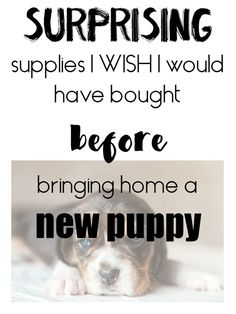 dog supplies list Having a puppy is a great fun, but takes preparation. Heres the list of surprising items I wish I would have bought BEFORE we brought our puppy home! Puppies Tips, Best Puppies, Toy Puppies, Whelping Puppies, Newborn Puppies, Dog Training Methods, Training Your Dog, Puppy Care, Dog Care