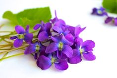 Recipes for Candied Violets,&Violet Syrup