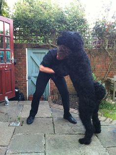 A selection of the best images of enormous pets submitted via GuardianWitness, including tremendous terriers, big bunnies and fat cats Animals Images, Animals And Pets, Black Russian Terrier, Big Dog Breeds, Huge Dogs, Giant Schnauzer, Terrier Dog Breeds, Scottish Terrier, Dogs Of The World
