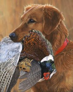 5e1fea8811eab 10 Best Hunting Dog Breeds whether it's for duck hunting, pheasant hunting,  waterfowl retrieval, the top 10 best hunting dog breeds are explored here.