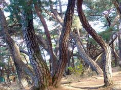 One day, one photo. Midnight Sun, Pine Tree, Landscape Photographers, First Photo, Sunlight, Japan, City, Nature, Plants