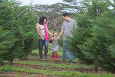 Picking a locally grown Christmas tree with the family.  #Aqua12staysofchristmas