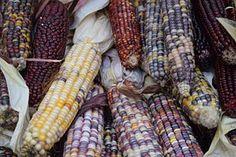 Vegetables, Veggies, Corn, Colors