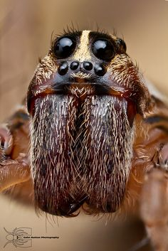 Southeast Oklahoma. The wolf spider is an aggressive hunter, but is generally shy and will run away when disturbed. Follow Boondockers Landing River Resort for more interesting, informative, and fun boards about Oklahoma and Kiamichi Country region.