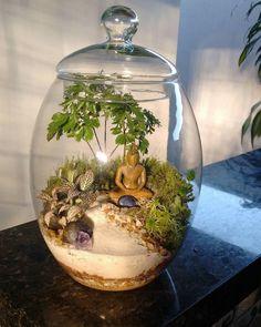 Escuela de Bonsai Online is creating Bonsai Vídeos Mini Terrarium, Succulent Terrarium, Water Terrarium, Hanging Terrarium, Mini Zen Garden, Garden Art, Succulent Gardening, Succulents Garden, Zen Garden Design