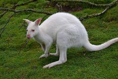 animales albinos fotos - Buscar con Google