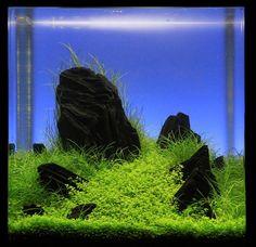 Planted Aquarium Inspiration
