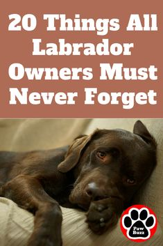 20 Things All Labrador Owners Must Never Forget. The Last One Brought Me To Tears… Here are important life lessons that are sometimes easy to forget in our hectic lives, that all Labrador owners must Labrador Retrievers, Silver Labrador Retriever, Golden Retriever, Retriever Puppy, Brown Labrador, Silver Lab Puppies, Black Lab Puppies, Schwarzer Labrador Retriever, Labrador Puppy Training