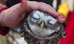 Yes, my favorite place is anywhere I can pet an owl and it looks happy about it