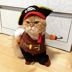 HAHAHAHAHAHAHAHAHA Socorrooooooooo!!! 😂😂😂 Cute Baby Cats, Cute Cats And Kittens, Cute Funny Animals, Kittens Cutest, Funny Cats, Pretty Cats, Beautiful Cats, Animals Beautiful, Cute Cat Costumes