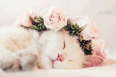 Have a nice Evening, looks like this cats it peacefully resting.
