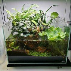 "2,737 Me gusta, 9 comentarios - Aquarium Hobby (@aquariumhobby) en Instagram: ""Go follow @terrariumdreams!    If you like aquariums, terrariums, and all things green you need…"""