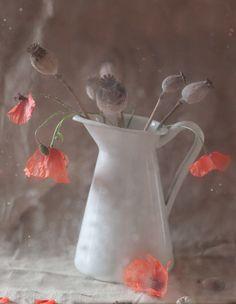 Poppies by Natalia Larina on 500px