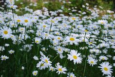 run in a field of daisies